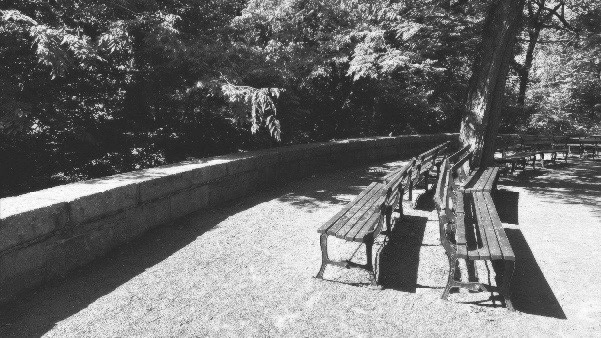 Empty Benches, Central Park, June 2020